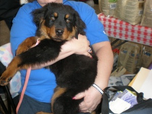 Harley Is An Adoptable Rottweiler Dog In Franklin Va Meet Harley This Saturday From 1 00 To 5 00 At Care A Lot Pet Supply In Dog Supplies Rottweiler Dog Dogs