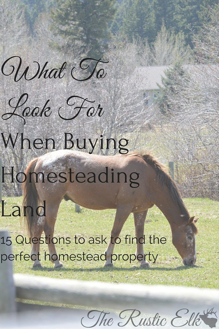 On the market to purchase a new homestead property? Looking at vacant land? Looking at farm land? here are 15 important questions to ask in order to find the perfect homestead property!