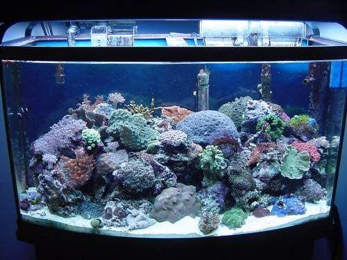 Way For Your Saltwater Aquarium Setup  Choosing A Tank