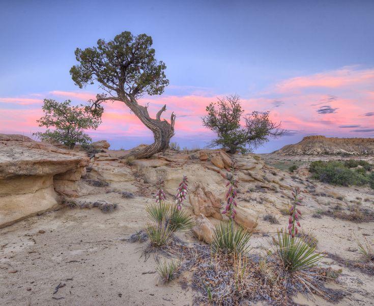 Colorado Plateau - Wikipedia, the free encyclopedia