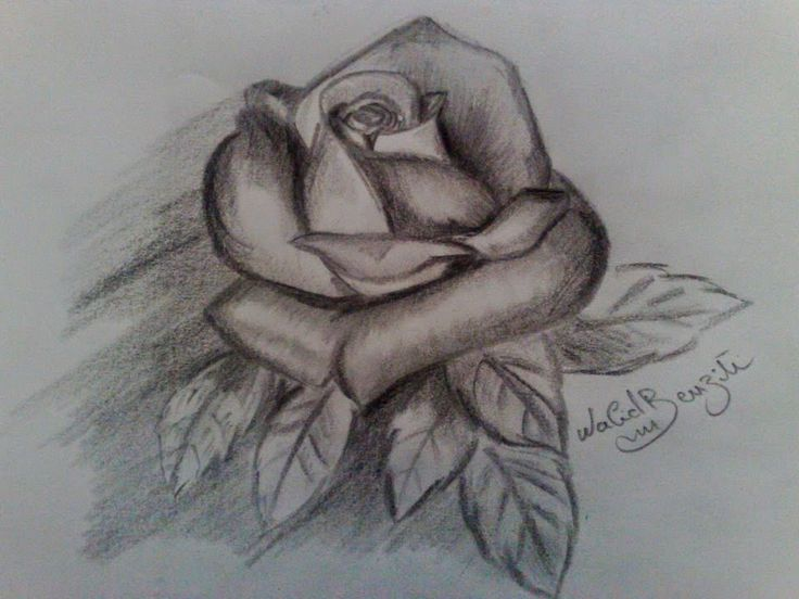 dessin fleur crayon
