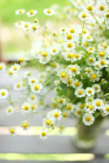 Love daisies almost as much as daffodils... to lie down in a field of daisies - Heavenly...
