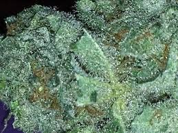 24Online7wd offered online store to sell Best Cannabis Products USA, Here you could Buy High Quality Marijuana (Cannabis), Buy Marijuana Edibles Online, Buy Medical Marijuana Online USA, Buy Weed Online in USA, Buy Weed Online USA, Cannabis.
