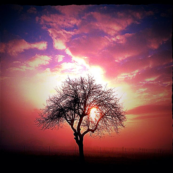 Magic Tree #mjdoddy collection Welcome Sun #photoexpress #wonderland #whatawonderfulworld #whenthesunsgoesup #sunset #sunshine #seethebeauty #relax #thessaloniki #iphoneonly #instagreece #imagine #orange #aviary #deluxefx #feelings #feelthevibe #Greece #keepthespiritalive #colors #chill #nature #magic #Hellas