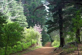 walks in newlands forest