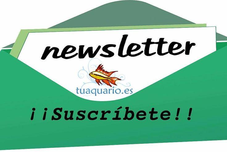 Hemos creado una lista de suscripción para nuestro blog. Ahora vamos a estar un par de semanas sin actividad apenas pero en Mayo la retomaremos y la mejor forma de no perderte nuestra actividad es suscribirte a nuestro boletín! https://www.tuaquario.es/boletin-newsletter/  #acuario #acuariofilia