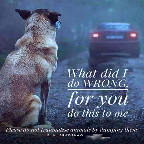 Please Don T Leave Me Animal Quotes Baby Animals Dogs