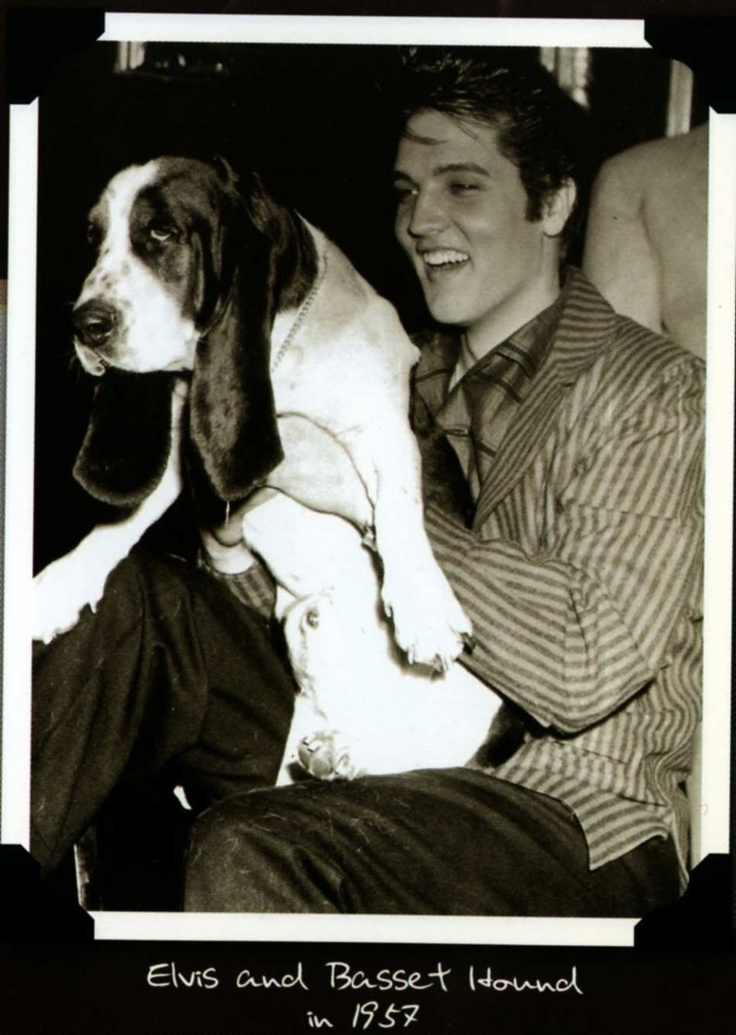 Elvis and a beautiful basset, Elvis liked basset hounds, just like me..