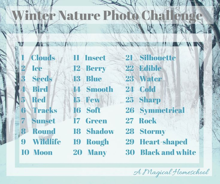 25 Wonderful Ways to do Nature Studies in Winter (photo challenge and 24 more!)
