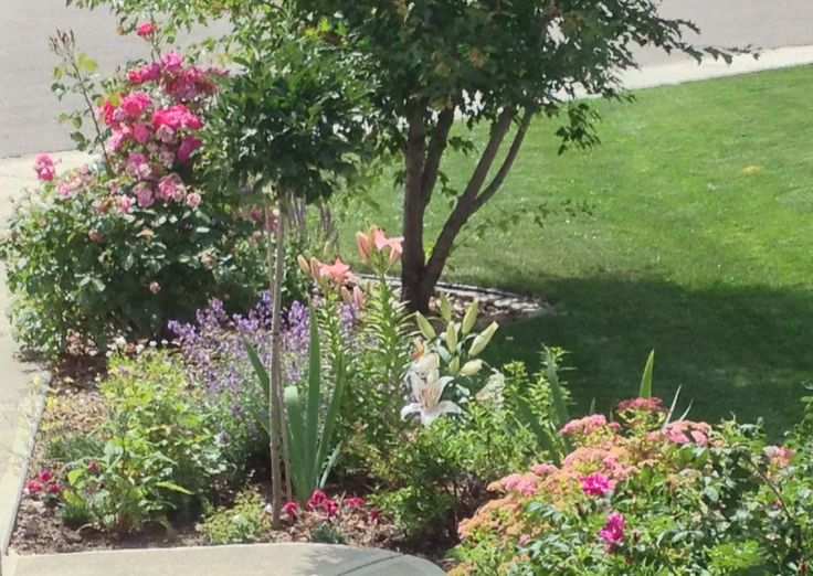 Garden Ideas Edmonton 79 best edmonton plants images on pinterest | flowers, flowers