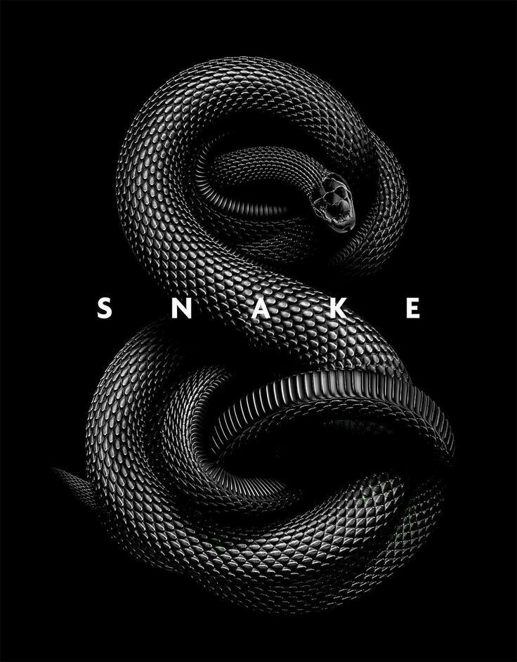 Pin By Shahin On Black White Snake Wallpaper Black Mamba Snake Snake Art
