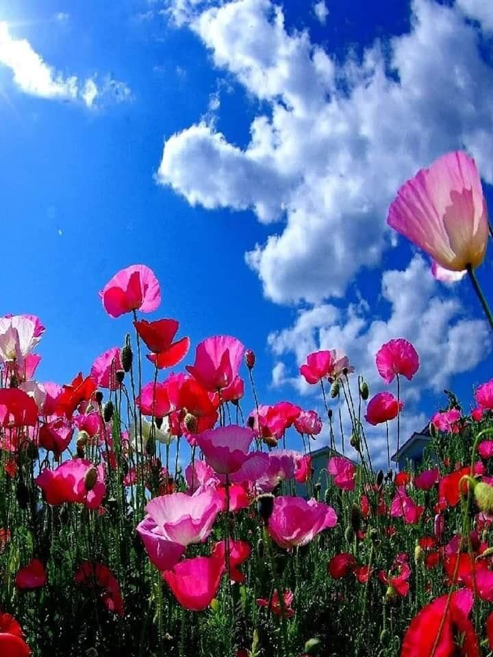 Pin Ot Polzovatelya Julie Na Doske Blumen Cvetochnye Kartiny Oboi Maki