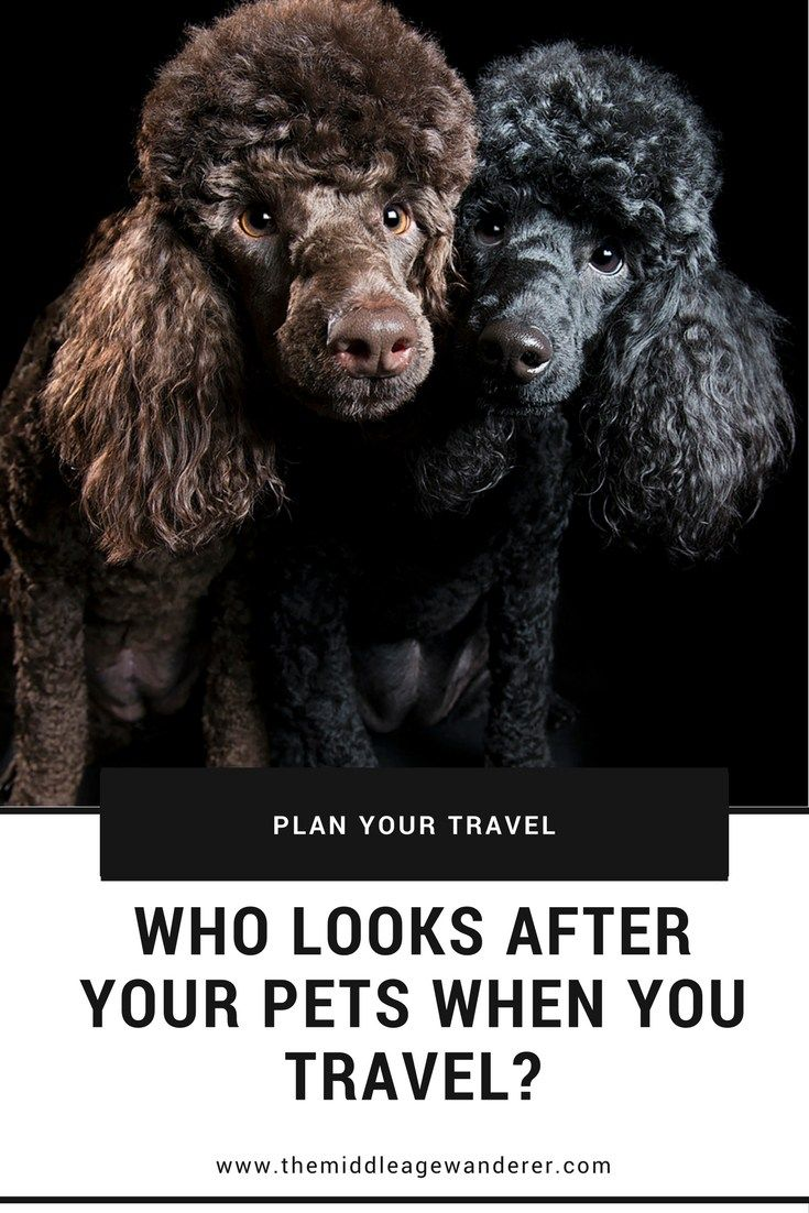 Who looks after your pets when you travel? | The Middle Age Wanderer