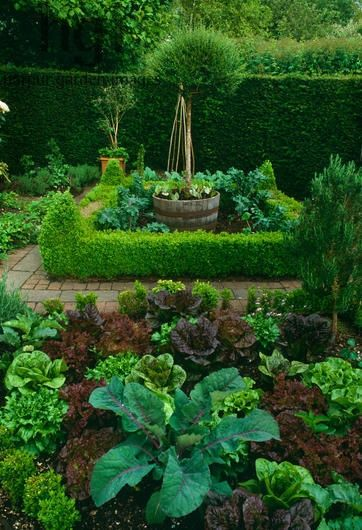 Kitchen garden - I like the barrel idea - nice focal point, and you could put something that would be too aggressive in there too!