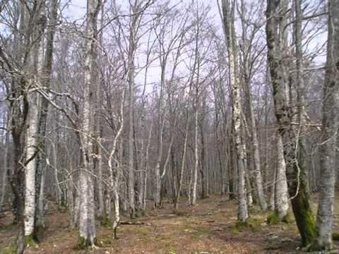 Audició L`Hivern ( Vivaldi) - YouTube
