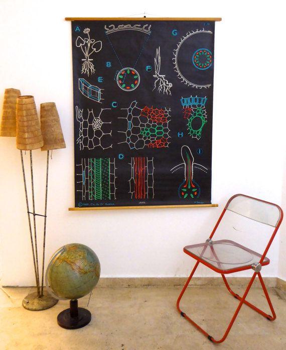 Vintage botanische School grafiek - grote minimalistische bloem Print - Science Poster - Dr Auzoux, Parijs 1969 zwart-witte kunst