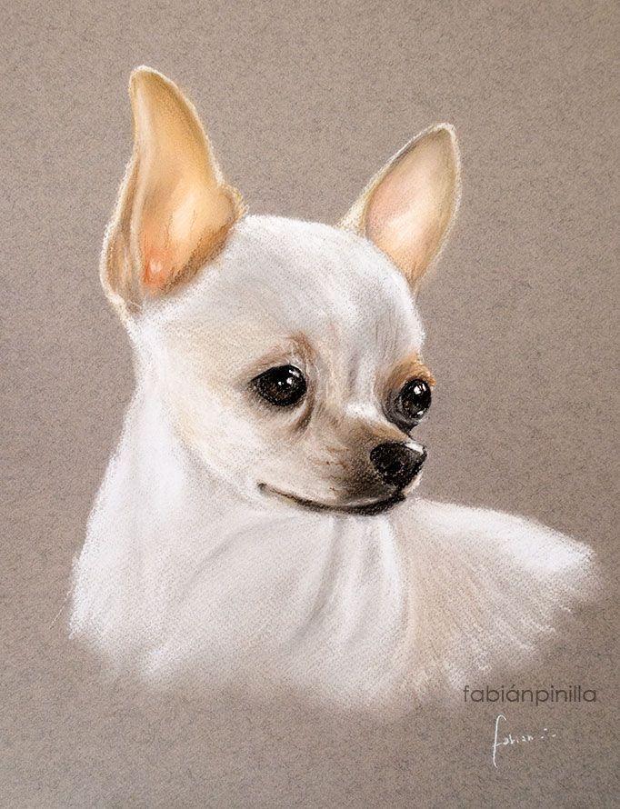Retrato Chihuahua, Pastel Seco 30 x 40 cm.