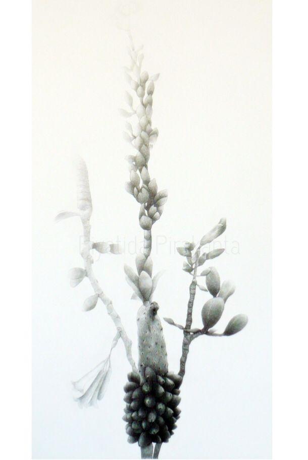 Blossm 2011 TECHNIQUE : Etching