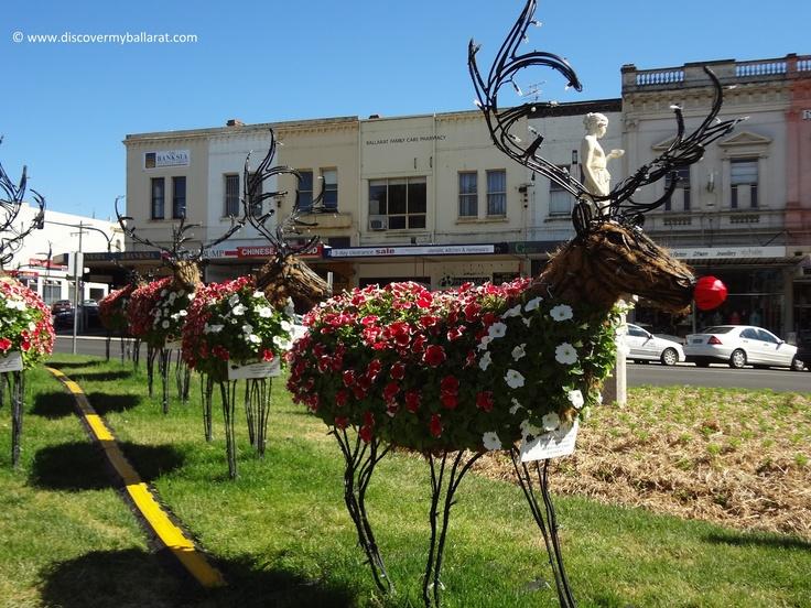 Rudolph and the other Reindeer in Sturt Street, Ballarat