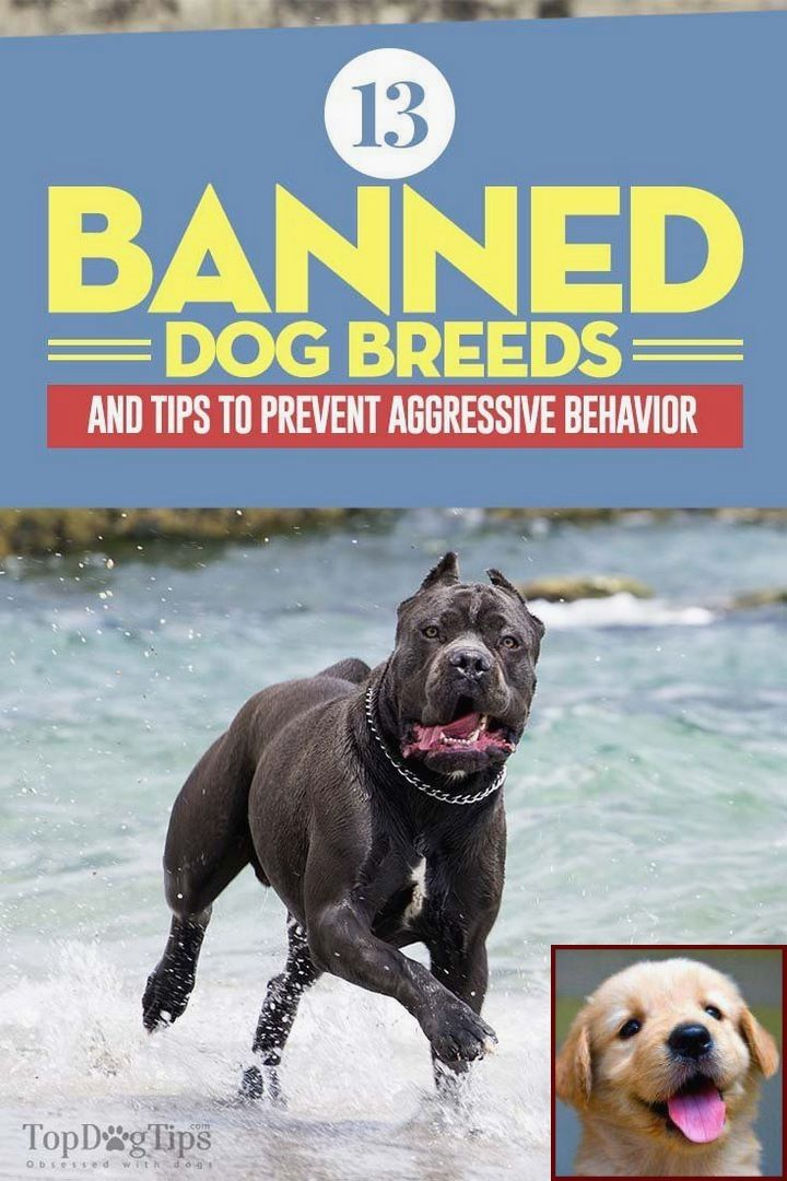 Pin By Kelly Delta Dog Training On Dog Behavior Banned Dog