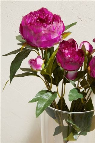 Buy Set Of 2 Purple Peony Stems from the Next UK online shop