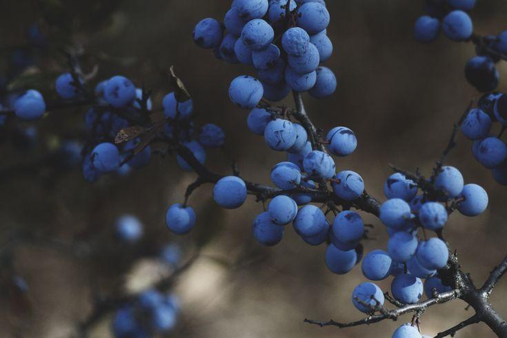 Getrocknete Heidelbeeren helfen gegen Durchfall * BUNTERwegs.com