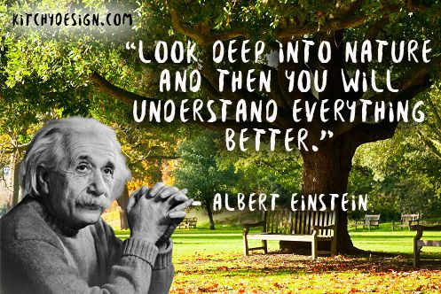 #kitchydesign #einstein #motivation #quotes