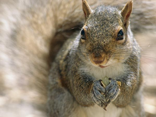 Google Image Result for http://images.nationalgeographic.com/wpf/media-live/photos/000/605/overrides/how-squirrels-birth-control_60543_600x450.jpg