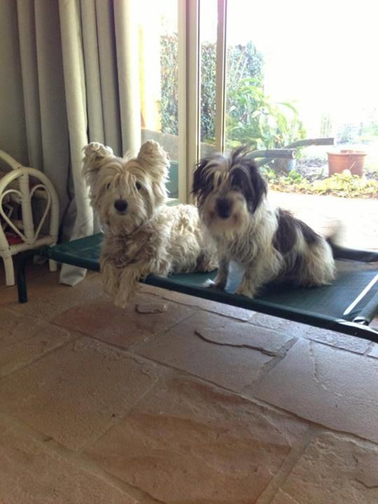 Pet Barrier time for Elvis and Bonnie - no more chasing Roos :)