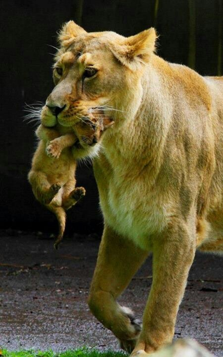 29 best lisa bevereazing woman images on pinterest books reminds me of great book lioness arising by fandeluxe Images