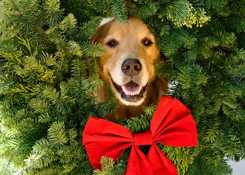 Golden Retriever Dog Holiday Card by ammfoto on Etsy, $3.00