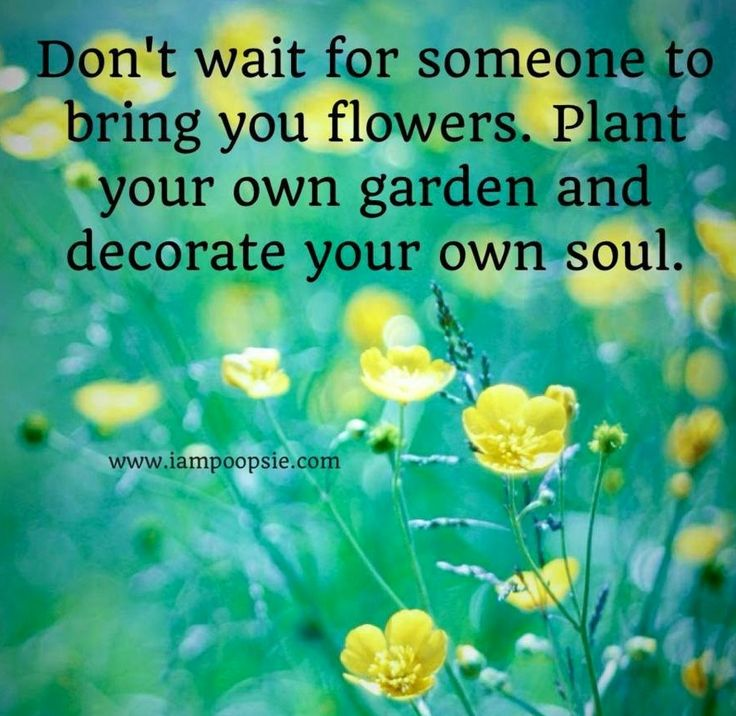 1000+ Images About Flower Quote On Pinterest
