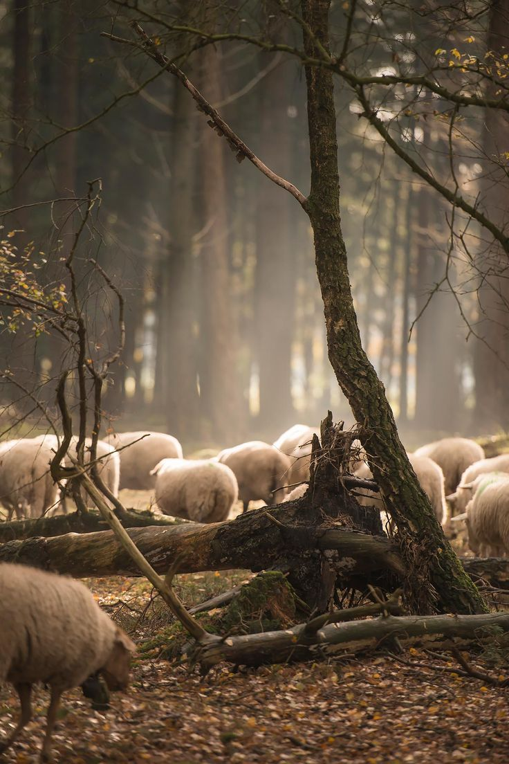 schaapskudde in bos bij elspeet | www.twoonhuis.nl