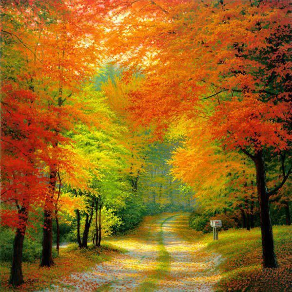 Autumn Woods, Netherlands