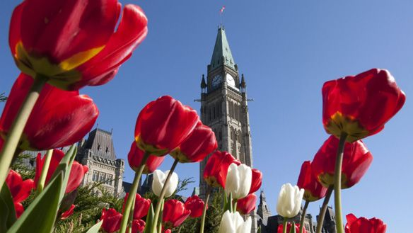 Happy First Day of Spring, A reminder that the Tax Filing Deadline is just around the corner!  #MilotLaw #TaxLawTO       Ottawa The Canadian Tulip Festival