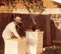 I am tasting honey (really in my dreams...)  I would love to have bees in my backyard!