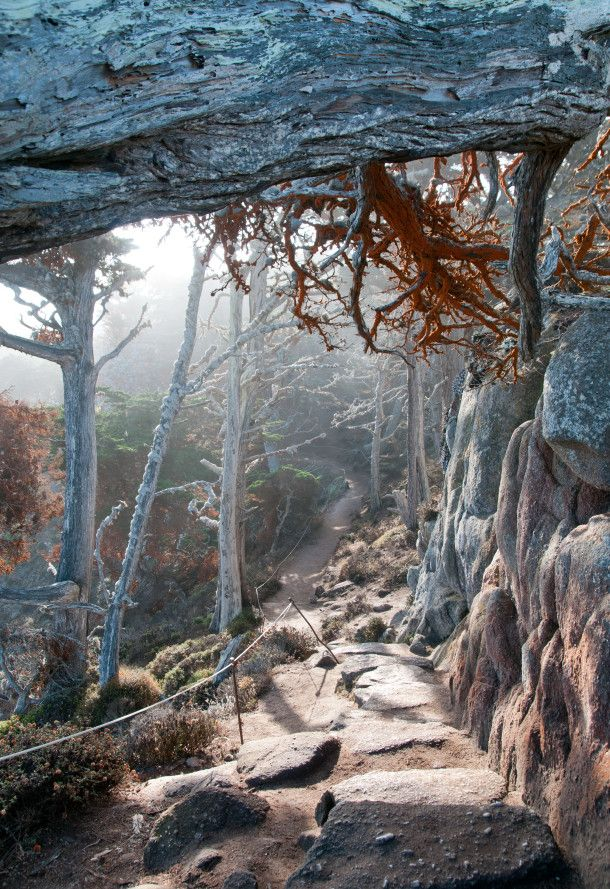 Things To Do in Carmel, CA - Cypress Grove Trail at Point Lobos