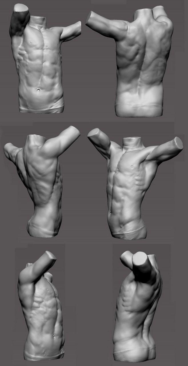 Fine Male Torso Anatomy Reference Pattern - Physiology Of Human Body ...