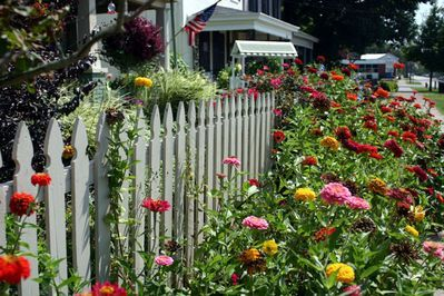 cottage garden picket fence | ... cottage garden. Oh, Modafinil forum , Modafinil natural , to have a