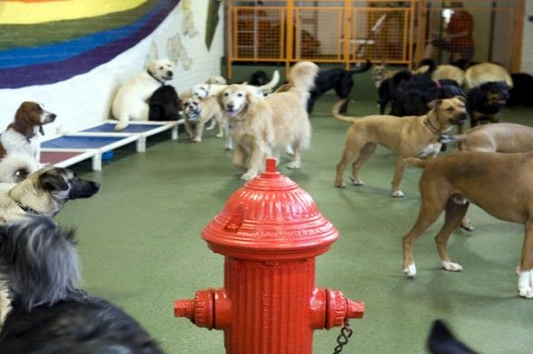 112 best images about dog daycare ideas on pinterest dog for Best doggy day care