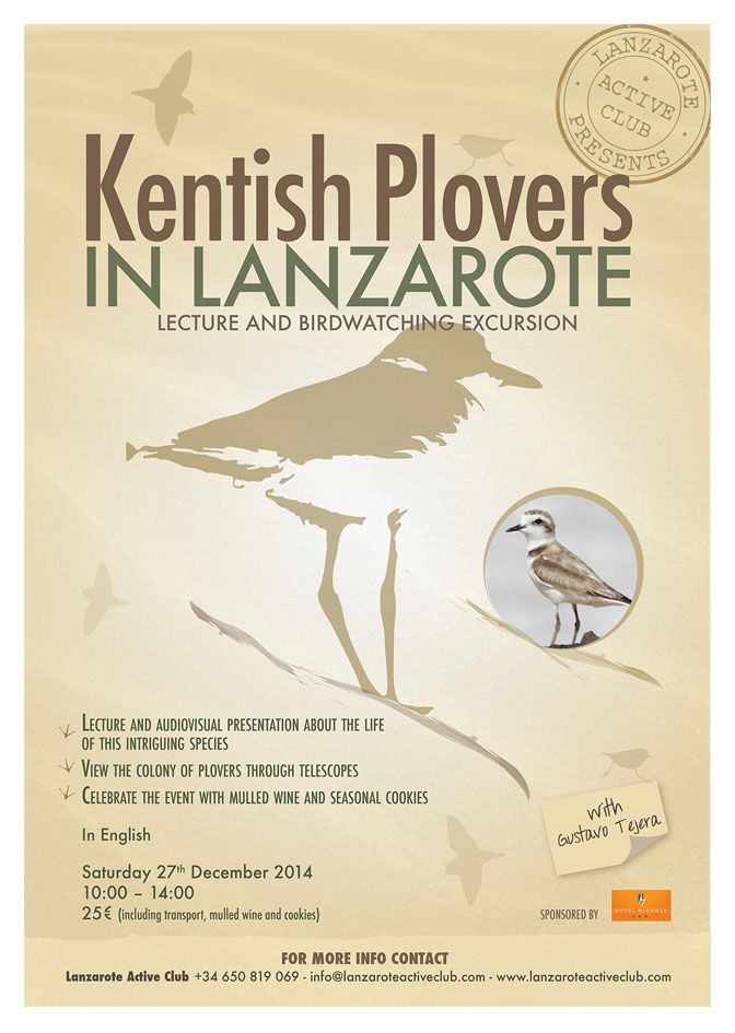 A3 poster - Kentish Plover Birdwatching excursion - It doesn't fall in the series of previous because it's a extra-excursion, but the colors and fonts refer to the #birdwatching poster. Made for LAC. #lilymedicidesign #graphicwork #ilovemywork #creative #design #excursions #lanzarote