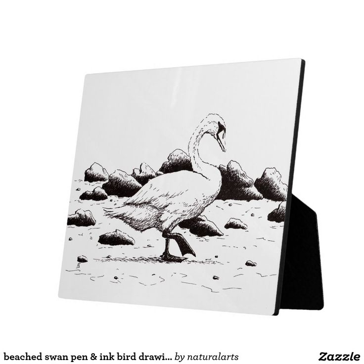 beached swan pen & ink bird drawing photo plaques