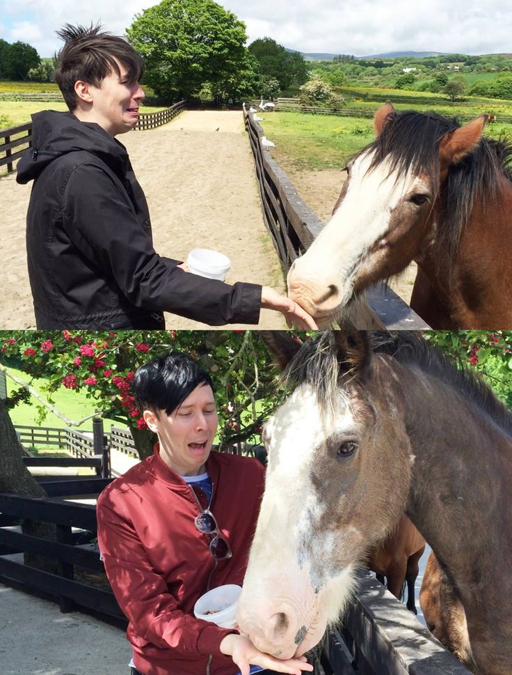 Dan Howell and Phil Lester being scared of horses. (danisnotonfire and AmazingPhil)