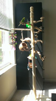 Pet Bird DIY Ideas... Easy and cheap DIY Play Gym or Stand