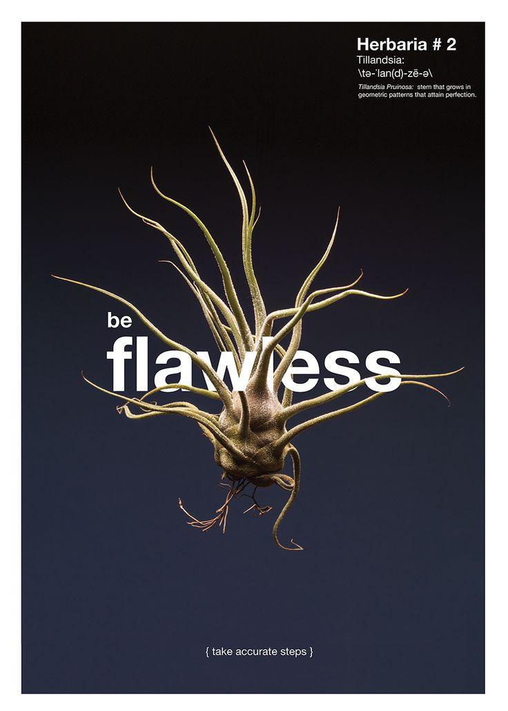 LECCIÓN No.2 / SE IMPECABLE {crece con precisión}  Planta: Tillandsia Pruinosa. La perfección geométrica de esta planta puede no verse tan exacta, pero sus decisiones de crecimiento son matemáticamente calculadas.