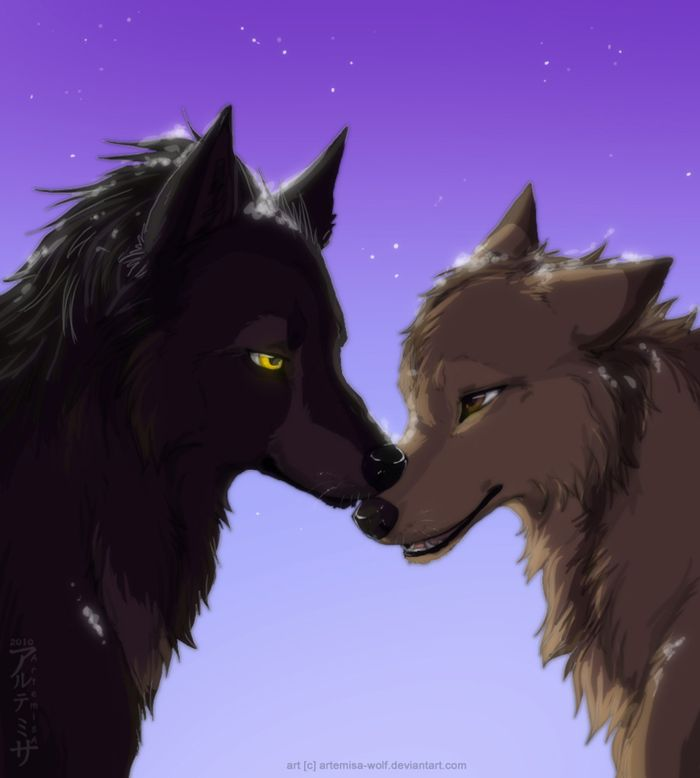 606 best images about wolves on pinterest - Anime wolves in love ...