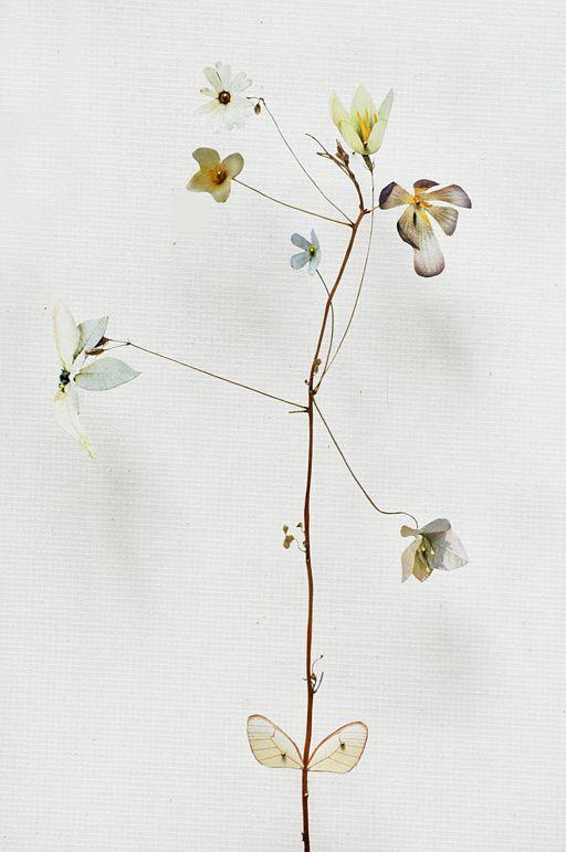 Anne Ten Donkelaar - Flower construction