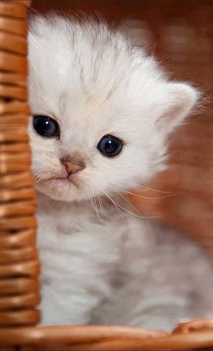 ♥ Precious baby kitty                                                                                                                                                                                 Plus