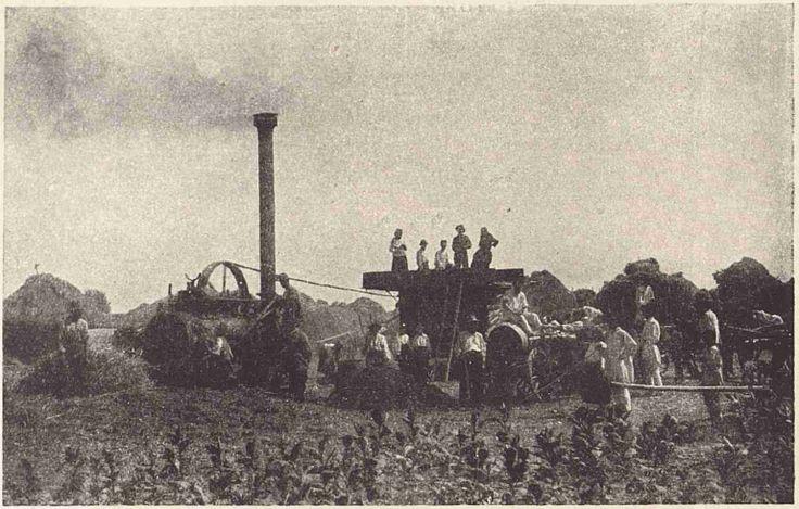 1930 Treierat cu batoza - Comuna Bordei Verde, Brăila - Wikipedia