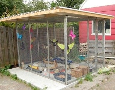 Ferrets Outdoor And Ferret Cage On Pinterest